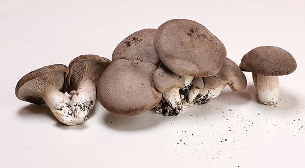 funghi-storia1