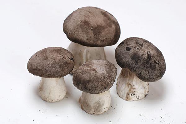 funghi-storia2